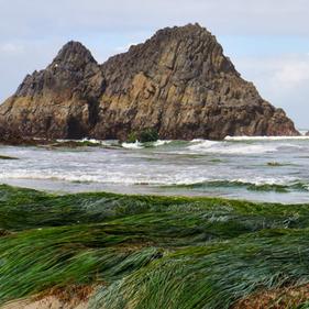 Sealrockthumbnail