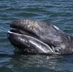 Whalewatchingspokenherethumbnail