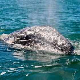 Streamwhalewatchingspokenhere