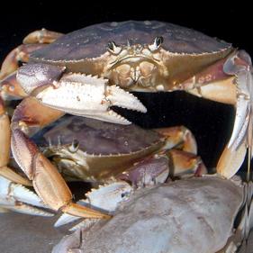 Crabfisherythumbnail