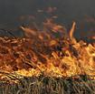 Wildfirethumbnail