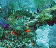 Reef7
