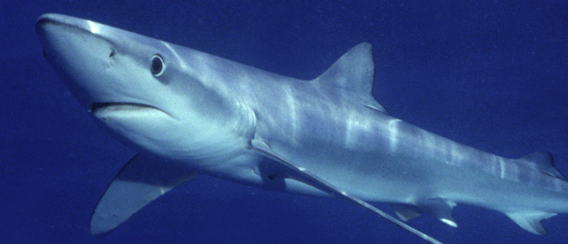 Sunlit zone oceanscape network for Twilight zone fish