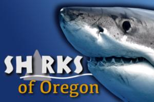 Sharksoforegonad