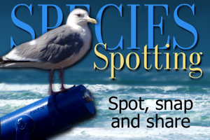 Speciesspottingad