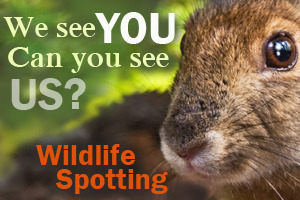 Wildlife_spotting_ad