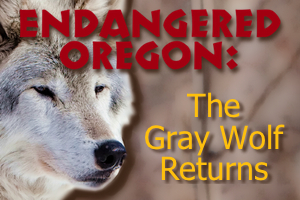 Endangeredoregonwolfad