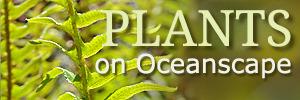 Plantsonoceanscapead