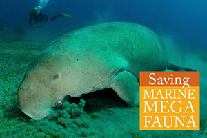Houseadsavingmarinemegafauna