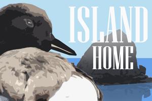 Islandhomead