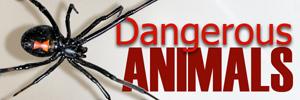 Dangerousanimalsad