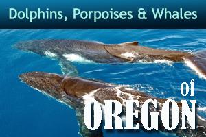 Whalesdolphinsporpoisesad