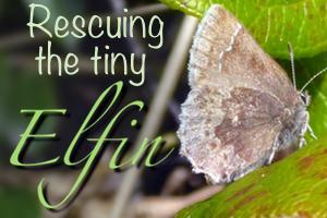 Rescuingelfinbutterfly