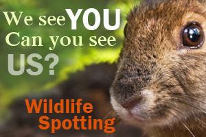 Wildlife_spotting_ad