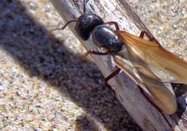 Beachcombslidefly