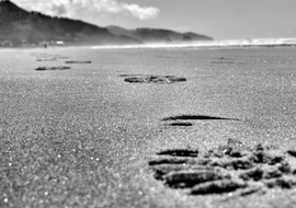 Beachcombslidefootprints