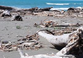 Beachcombslideseawrack
