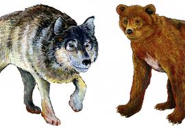 Missinganimalsbearandwolf