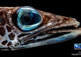 Deependdeepseafish2