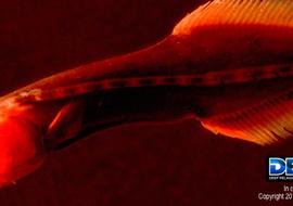 Deependdeepseafish5