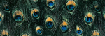peacock_print