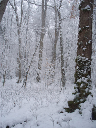 Last weekend's snowstorm plastered the woods with a heavy, wet layer of snow. (Photo — Joe Hackett)