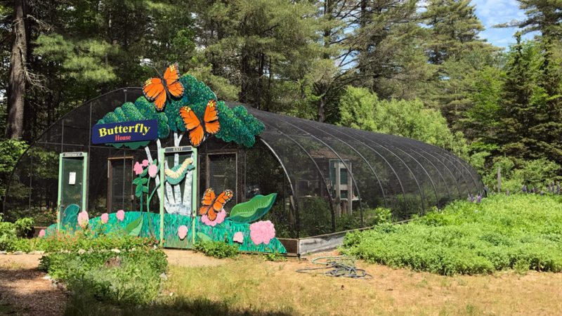 The Paul Smith's VIC Native Butterfly House provides a glimpse into the world of moths and butterflies. (Photo provided — Diane Chase)