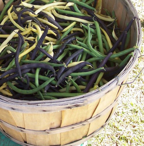 Basket of beans (Photo provided — Yvona Fast)