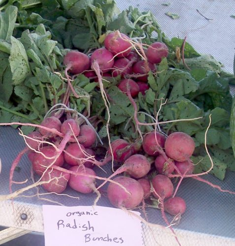 Radish bunches at farmers market  (Photo provided — Yvona Fast)