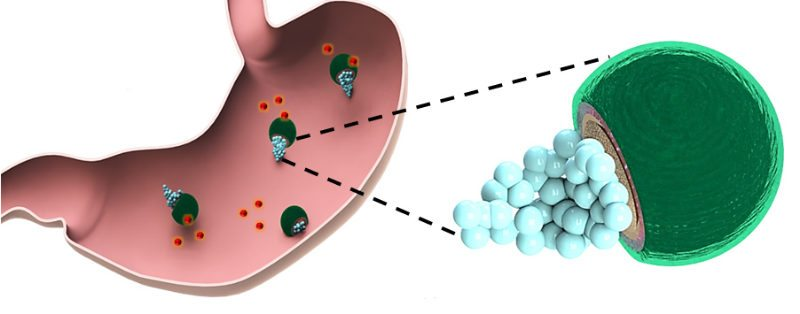 Micromotors unload antibiotics before dissolving in the stomach's acid. They have been tested successfully in mice and may someday help deliver drugs to humans with fewer side effects than current methods. (Image provided)