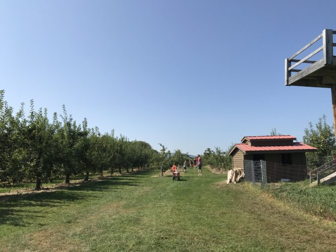 Apple picking time at Applejacks Orchard (Photo provided — Diane Chase)