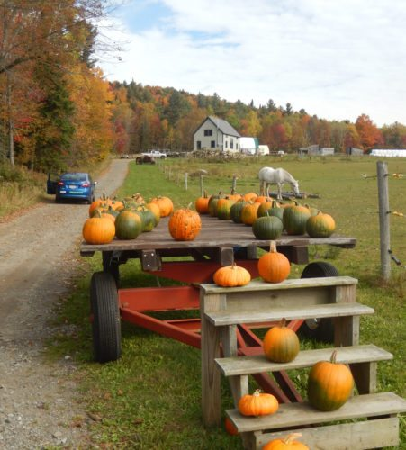 A wagon full of pumpkins (Photo provided — Yvona Fast)