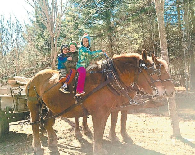 Young visitors to Country Dreams Farm in Plattsburgh check out the draft horses.  (Photo provided by Melissa Monty-Provost)
