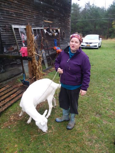 """Local farmer and artist Stephanie DeJoseph with """"Snowflake,"""" a milk goat at Iron Rooster farm. (Enterprise photo — Glynis Hart)"""