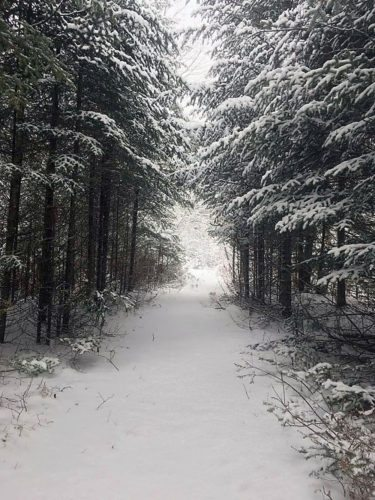 The Bog River Ski Trail in Tupper Lake is covered in snow Monday. (Photo provided — Matt Abrams)