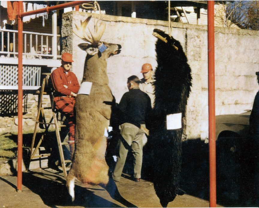 This big buck was taken by Dick Hogan, Pat Hogan's dad, on Keegan Hill on our old family farm in Alder Brook. Pat said he thought it dressed out at close to 250 pounds. Don't know the men in the picture, but the deer and bear are hanging in the empty lot that was then the Saranac Lake Hardware. The Waterhole, then Mike and Sandy's Restaurant, is in the background. Pat's grandmother Esther Keegan Hogan and my grandfather William Keegan were sister and brother. (Photo courtesy of Dan Patnode)
