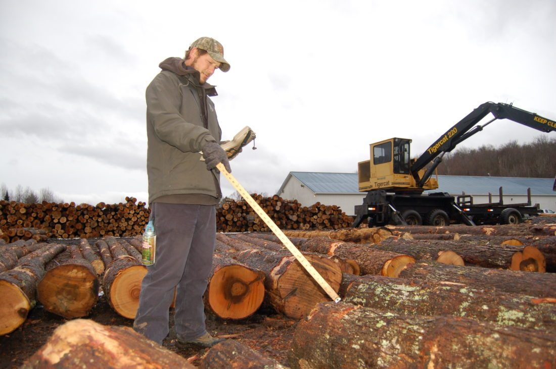 Chris Dewyea, general manager of Tupper Lake Hardwoods, inspects logs delivered to the sawmill, which produces around five million feet of board annually. Dewyea said though many believe timber is a dwindling industry, the demand for hardwoods is growing with global and U.S. housing markets. (Enterprise photo — Aaron Cerbone)