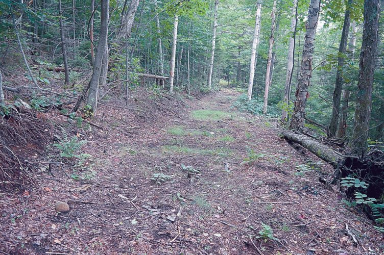 Class II snowmobile trails are wider and more heavily built than regular foot trails.  (Photo provided by Protect the Adirondacks)
