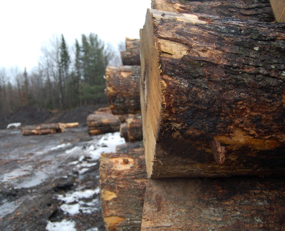 Logs are pictured this month at Tupper Lake Hardwoods. (Enterprise photo — Aaron Cerbone)