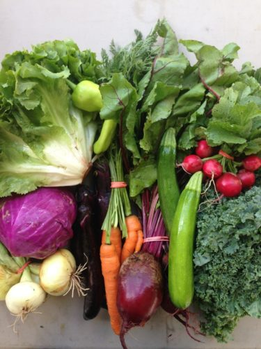 Representative CSA farm weekly full (or premium) share (Photo provided —Emma Lecarie; Cornell Small Farms Program)