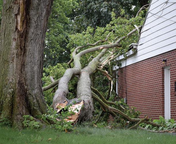 PHOTO BY JILL GOSCHE A tree rests on a South Washington Street house Monday afternoon.
