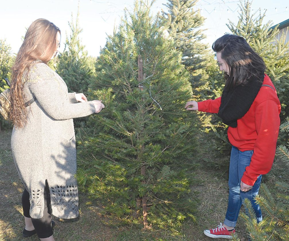 'Labor of love' keeps ND Christmas tree farmers going