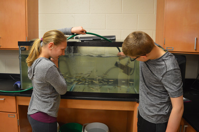 "Jordan Beck | Daily Press Gladstone Junior High School sixth-graders Miranda Barteld, left, and Alex Eilola clean the fish tank their class is using to raise salmon as part of a program called ""Salmon in the Classroom"" Tuesday. The salmon raised as part of the program will be released into the Escanaba River on May 5."