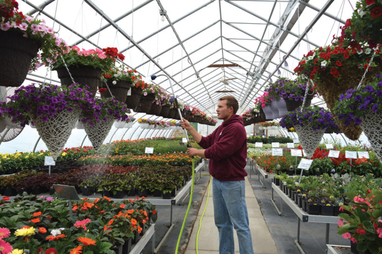 Jordan Beck | Daily Press Nick Chenier, a greenhouse assistant at Chenier's Greenhouse in Gladstone, waters flowers Tuesday. Chenier said that, while the area's gardening season is just beginning, early sales have been strong at his ­family's business.