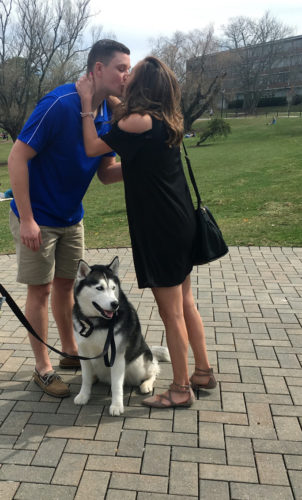 University of Connecticut via AP University of Connecticut mascot Jonathan, a Siberian Husky, assists Daniel Bronko of Enfield, Ct., in proposing to his girlfriend, Holly Korona, on the school's campus in Storrs, Ct. Bronko.