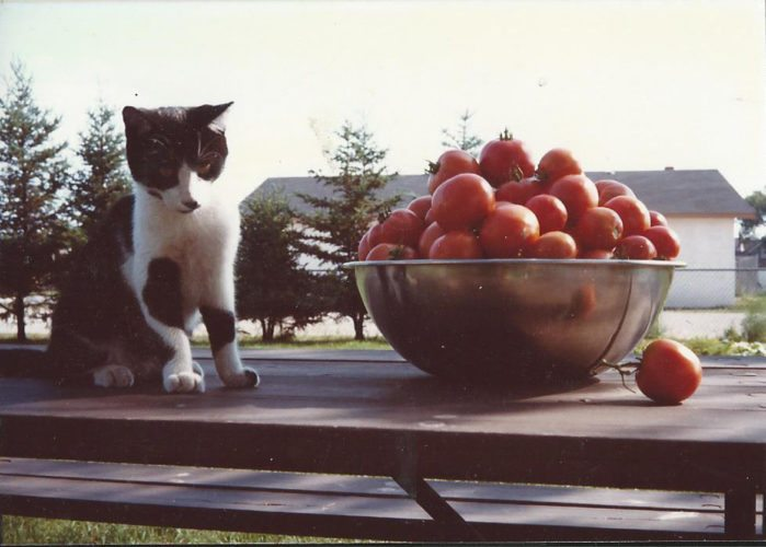 Courtesy photo Celebrate the harvest with ripe tomatoes.