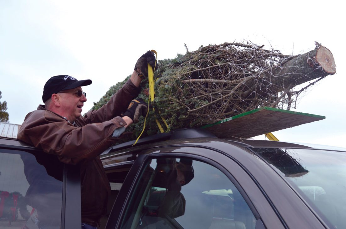 Jordan Beck   Daily Press Lakeville, Minn., resident John Messier secures a Christmas tree to the roof of his vehicle Friday. Messier bought this tree from Teal's Tree Farms in Bark River.