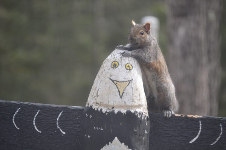 Karen Wils photo A gray squirrel perches on a wooden eagle.