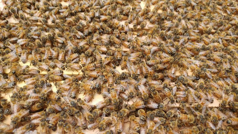 """Courtesy Photo  Honey bees from Bays de Noc Beekeeper member, Jessica LaMarch's beekeeping operation are shown. """"Beekeeping 101,"""" a workshop put on by the club, will be held today from noon until 2:30 p.m. at Bay College in Escanaba in Room 525."""