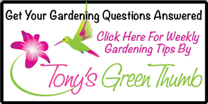 Gardening Tips by Tonys Green Thumb
